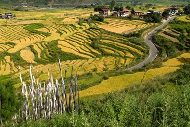 Rice fields, Bhutan