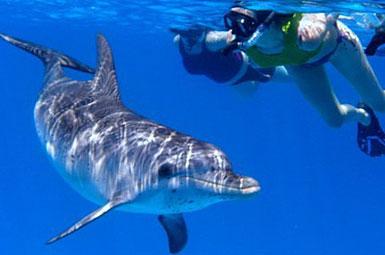 Wild Dolphins, Bimini