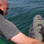 Whale watching Baja
