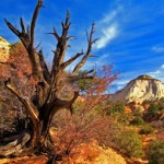 Zion National Park Art & Spirit
