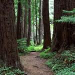 Redwoods Big Sur State Park