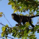 Monkeys at Agua Nicaragua