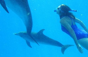 Bimini Swim with Dolphins