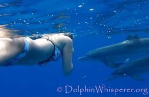 Spiritual Dolphin Adventure