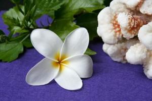 plumeria hawaii