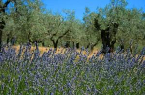 Spiritual journey Assisi