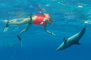 Swim with Bimini dolphins