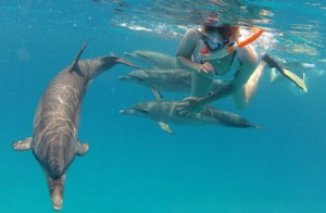 Wild dophin swim